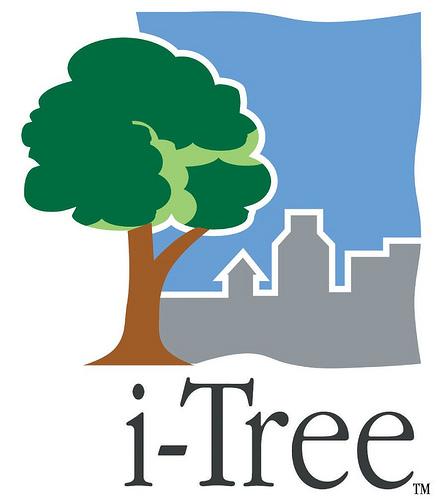 i-tree logo