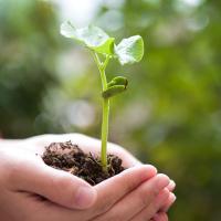 Hands nurturing a plant
