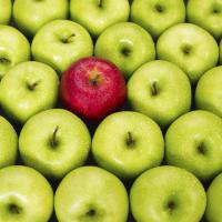 Red apple fitting in with green apples