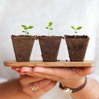 Agile servant leader nurturing three small plants