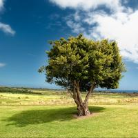 Tree on a green landscape