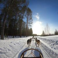 Huskies pulling a dogsled