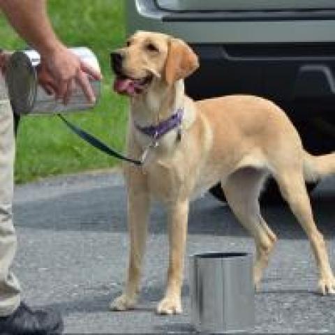 CIA dog