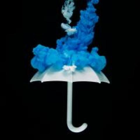 Blue dye merging with a white umbrella